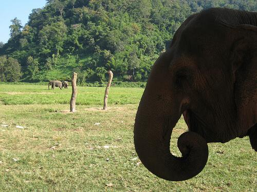 Een olifant wassen die een gebroken rug heeft